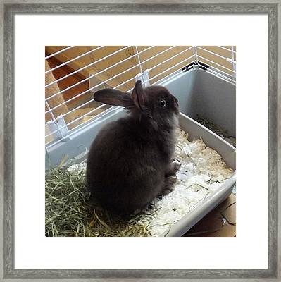 Framed Print featuring the photograph Portrait Of Bunbunz by Denise Fulmer