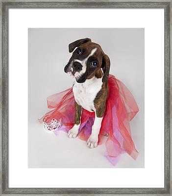 Portrait Of Dog Wearing Tutu Framed Print by Leah Hammond