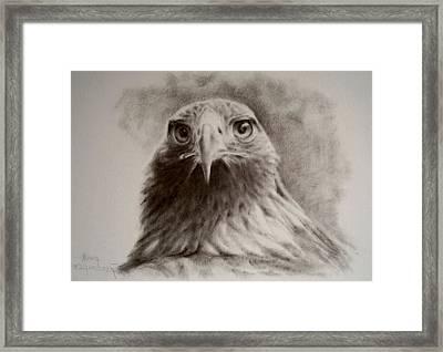 Portrait Of Eagle Framed Print by Anna Franceova