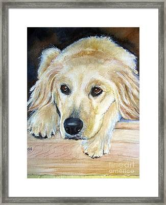 Portrait Of Golden Retriever Framed Print by Patricia Pushaw