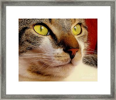 Portrait Of Greycoat Framed Print
