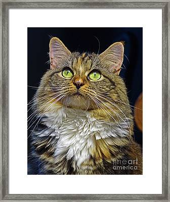 Portrait Of Holly Framed Print