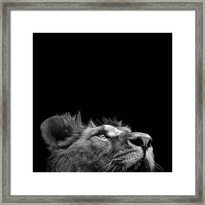 Portrait Of Lion In Black And White IIi Framed Print by Lukas Holas