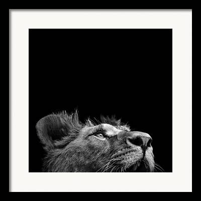 Black And White Lion Framed Prints