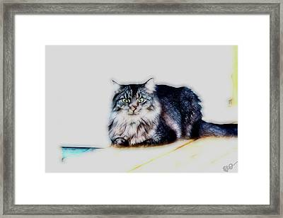 Portrait Of Maine Coon, Mattie Framed Print