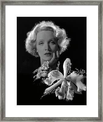 Portrait Of Marlene Dietrich Framed Print