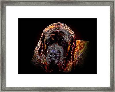 Portrait Of Mastiff Framed Print by Denis Bajan