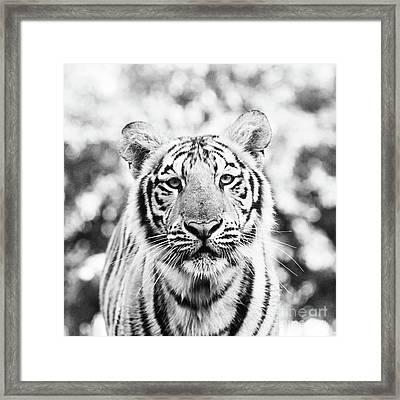 Portrait Of Mike Vii - Square Bw Framed Print