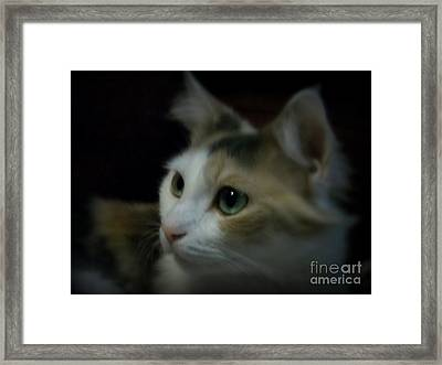 Portrait Of Miss Kitty Framed Print by Emily Kelley