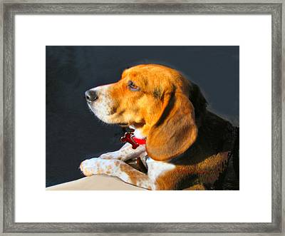 Portrait Of Pebbles - The Independent Beagle Framed Print