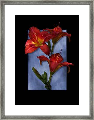 Portrait Of Red Lily Flowers Framed Print