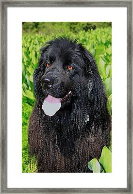 Portrait Of Sierra Framed Print