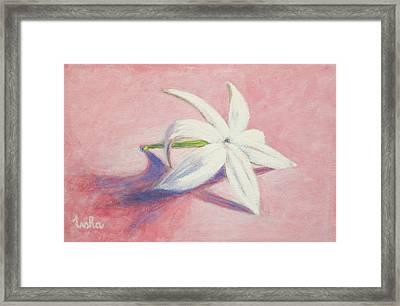Portrait Of The Jasmine Flower Framed Print by Usha Shantharam