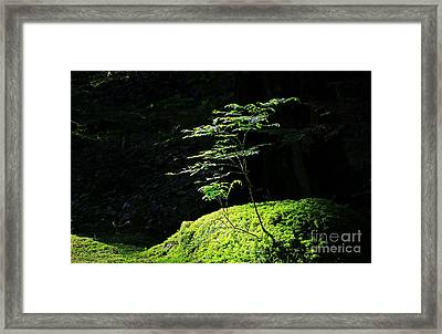 Portrait Of Two Tree Seedlings Framed Print by Charline Xia