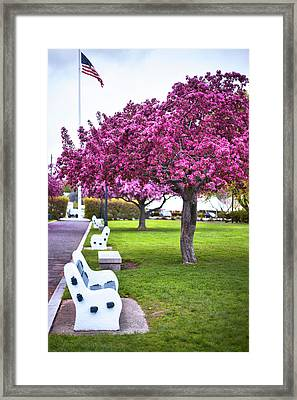 Portsmouth Bench And Tree Framed Print