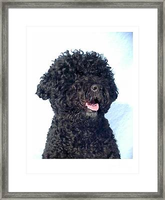 Portugese Water Dog 696 Framed Print by Larry Matthews