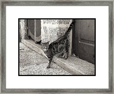 Portuguese Beauty Framed Print