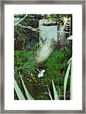 Portuguese Garden Framed Print by Sarah Loft