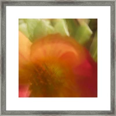 Portulaca I Framed Print