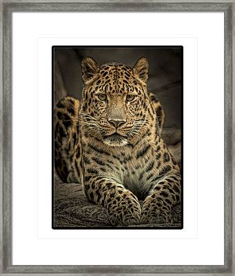Framed Print featuring the photograph Poser by Cheri McEachin