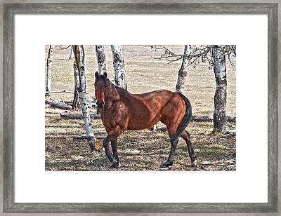 Poser Framed Print by Naman Imagery