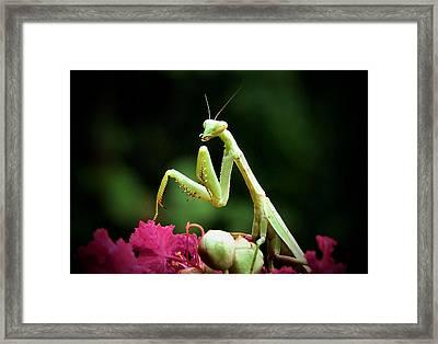 Poser Framed Print by Karen Scovill