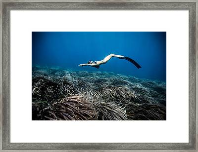 Posidonia Dreams Framed Print
