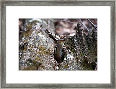 Framed Print featuring the photograph Posing #2 by Jeff Severson