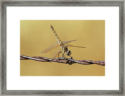 Posing For A Picture Framed Print