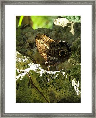 Posing In The Light Framed Print by Judy  Waller