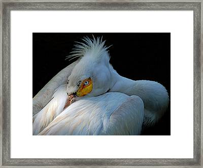 Framed Print featuring the photograph Posing by Lorenzo Cassina