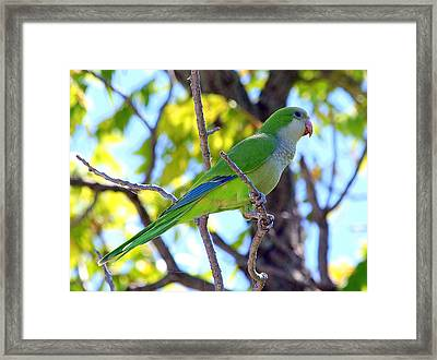 Posing Pretty Framed Print