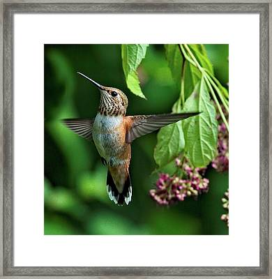 Posing Framed Print by Sheldon Bilsker