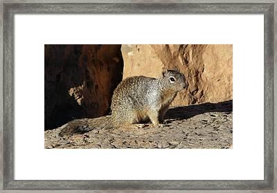 Posing Squirrel Framed Print