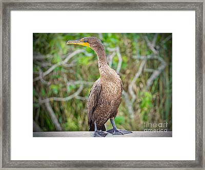 Posisng Sea Bird Framed Print