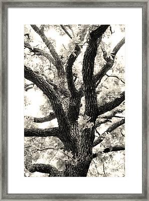 Post Oak Framed Print by Jeannie Burleson