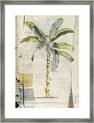 Postcard Banana Plant Botanical Framed Print by Carol Leigh