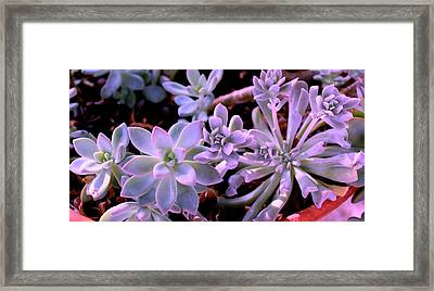 Pot Mates Framed Print by M Diane Bonaparte