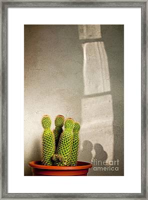 Pot Of Cactus Framed Print by Emilio Lovisa
