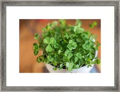 Pot Of Luck Shamrocks St Patricks Day Framed Print by Terry DeLuco