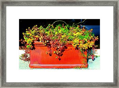 Pot Of Succulents Framed Print by Angela Annas