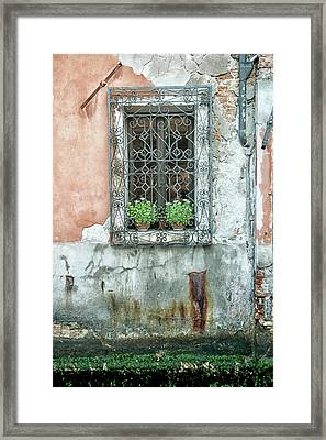 Pot Plant Window Framed Print