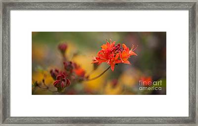 Potential Framed Print by Mike Reid