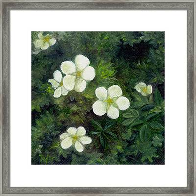 Potentilla Framed Print