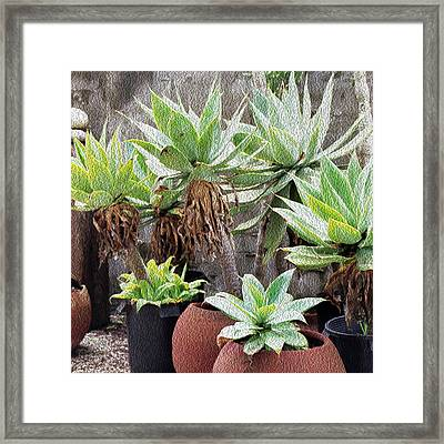 Potted Agave Plants Framed Print