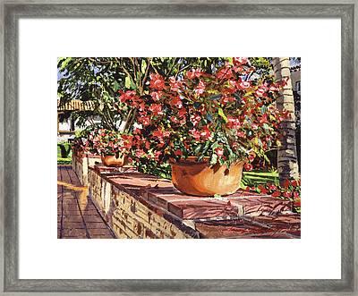Potted Begonias Santa Barbara Framed Print