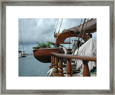 Potted Dory Framed Print by Nancy Taylor