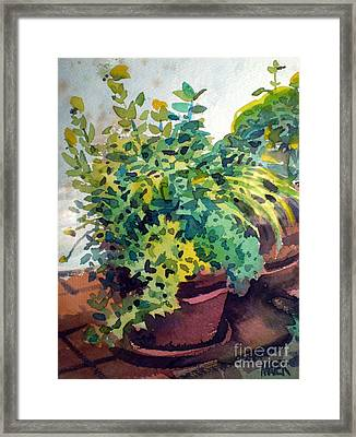 Potted Herbs Framed Print by Donald Maier