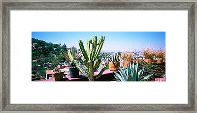 Potted Plants On Terrace Of A Building Framed Print