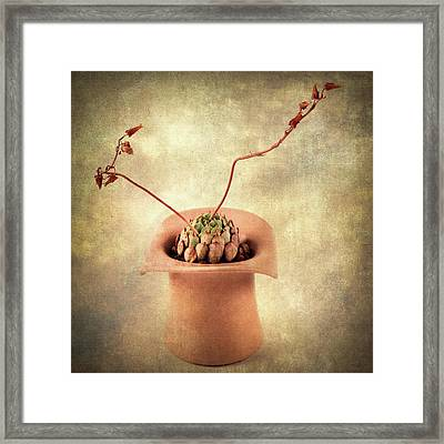 Framed Print featuring the photograph Potted Succulent by Catherine Lau